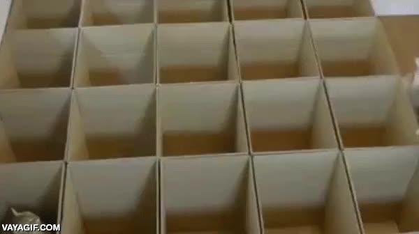 Enlace a Tú solo pon un montón de cajas de cartón juntas y espera