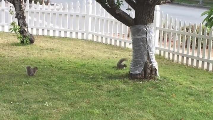 Enlace a Estas ardillas se quedan muy locas al encontrarse un árbol con el tronco plastificado