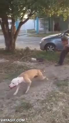 Enlace a Este perro sería capaz de atraparte incluso si estuvieras a 4 metros de altura