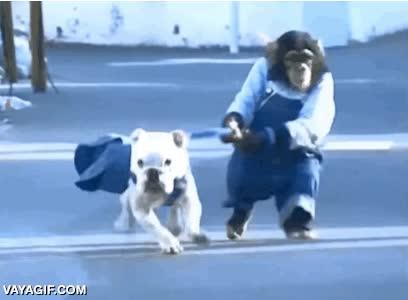 Enlace a Combinar dos mascotas que se puedan cuidar la una a la otra y no tener que preocuparte por nada más