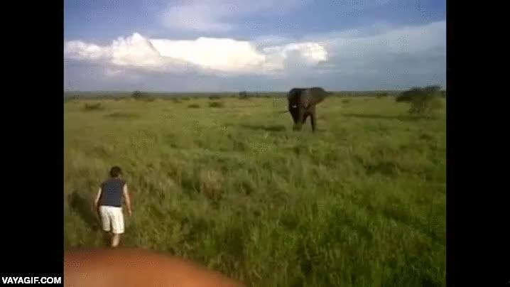 Enlace a El exceso de bebida en el cuerpo te hace tan valiente como para enfrentarte a un elefante