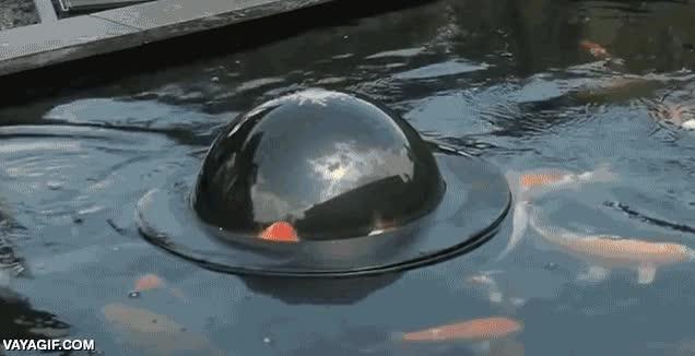 Enlace a Un estanque para carpas japonesas con cúpula para que los peces echen un ojo al exterior