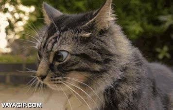 Enlace a Un gato después de tomar un poquito de catnip