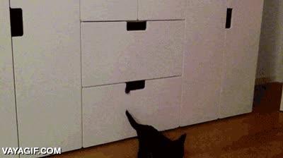 Enlace a La máquina clonadora de gatitos ya funciona a pleno rendimiento