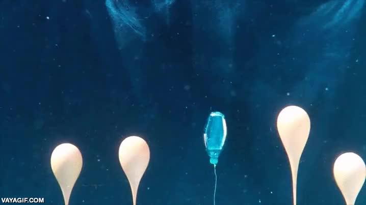 Enlace a Explosión y onda expansiva de una botella de plástico llena de nitrógeno líquido bajo el agua