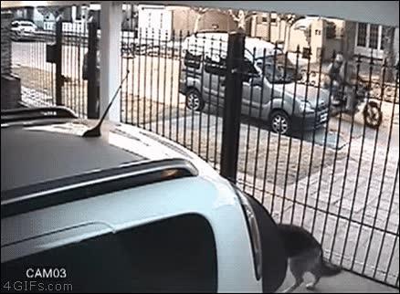 Enlace a Rápida reacción de esta chica para evitar que dos ladrones en moto se lleven sus cosas