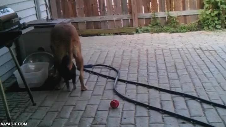 Enlace a Eres una sombra genial perro, pero si dejaras de moverte ya serías fantástico