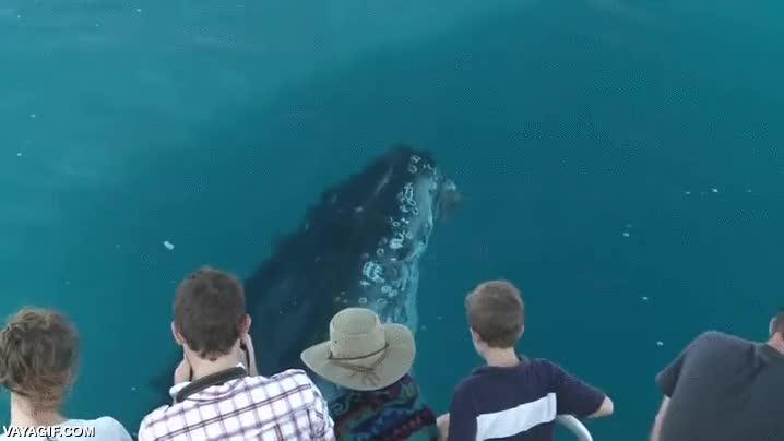 Enlace a Es difícil observar a las ballenas de más cerca y sin mojarse