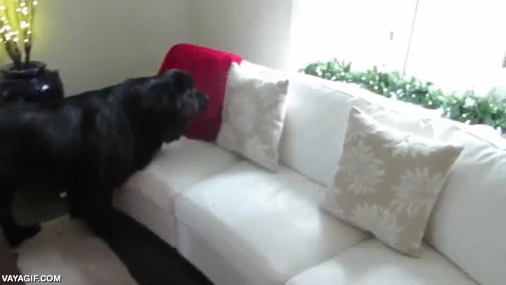 Enlace a Jugando al escondite, este perro es el mejor