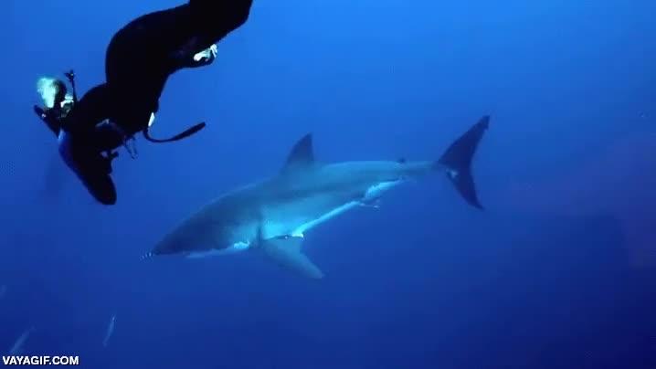 Enlace a La buceadora más temeraria que he visto, agarrada de la aleta de un tiburón blanco