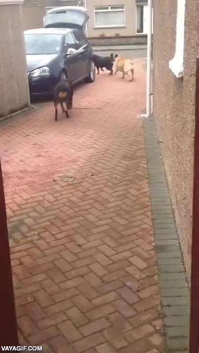 Enlace a Nada como un perro que te ayude a llevar la compra