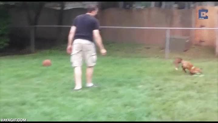 Enlace a ¿Perros para jugar con el frisbee? Nah, mejor un zorro alocado