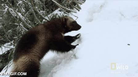 Enlace a Sal de excursión a la nieve dijeron, ¿qué es lo peor que podría pasar?