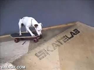 Enlace a Os presentamos a Petete Hawk, el perrete skater definitivo