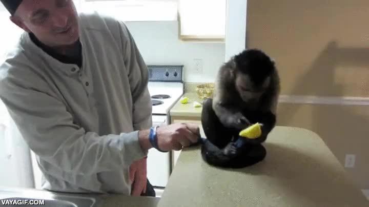 Enlace a Un mono probando por primera vez el limón, ¡menuda reacción!