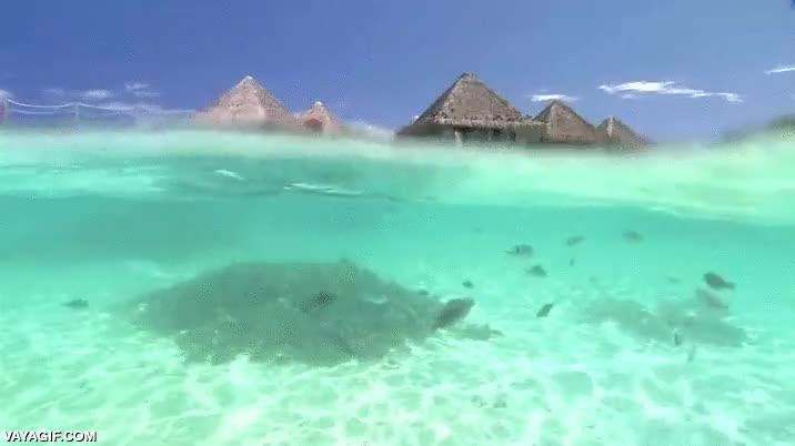 Enlace a ¿A alguien le apetece un bañito en las aguas de Tahití?
