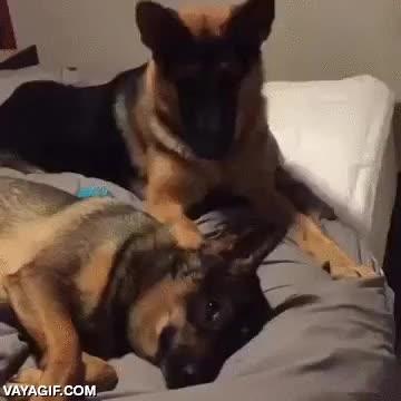 Enlace a ¡Eh, tío! ¡Eh, oye! ¿Estás despierto?