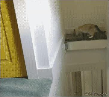 Enlace a ¿Un gato atrapado? ¡Eso no existe!