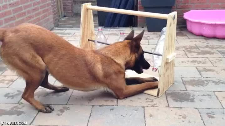 Enlace a Cómo tener entretenido a tu perro de la manera más económica