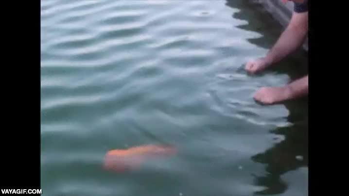Enlace a Si tus padres no te dejan tener un perro, todo es ponerte a entrenar a tu pez
