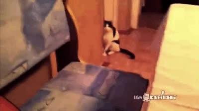 Enlace a El gato que se teletransportaba