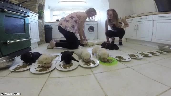 Enlace a Banquete de cachorros