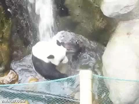 Enlace a Este panda conoce la efectividad del baño checo