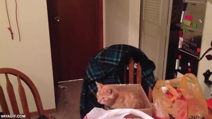 Enlace a Se moría de ganas de tener un gatito y por sorpresa cumple su sueño, así reacciona