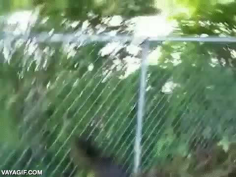 Enlace a Tío, solo son caimanes, con una valla de un metro hay de sobras para que no se escapen