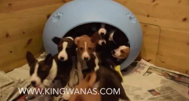 Enlace a El equivalente de un coche de payasos en caseta para perros