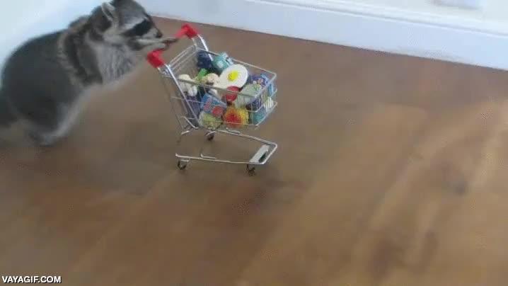 Enlace a Necesito un mapache así y que vaya a hacer la compra semanal por mí, prometo recompensarle bien