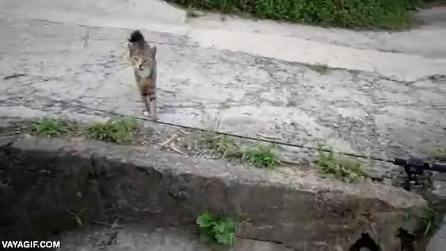 Enlace a Los gatos callejeros se multiplican cuando el pescador obtiene la captura del día