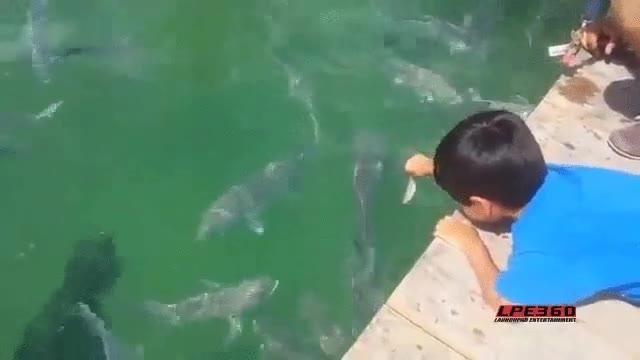 Enlace a Dale de comer a los peces, ¿qué es lo peor que te podría pasar?