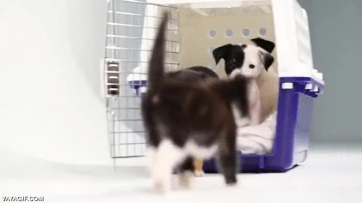 Enlace a Cachorros de gatos y perros conociéndose por primera vez