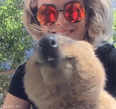 Enlace a No hay nada más simpático que un wombat comiendo visto desde abajo