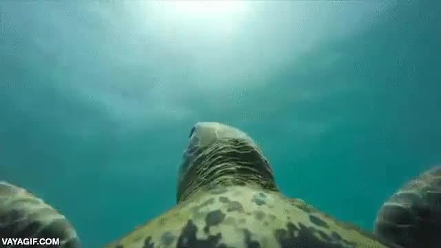 Enlace a Una GoPro montada encima de una tortuga marina