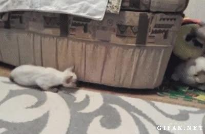 Enlace a Trolleando al pequeño gatito