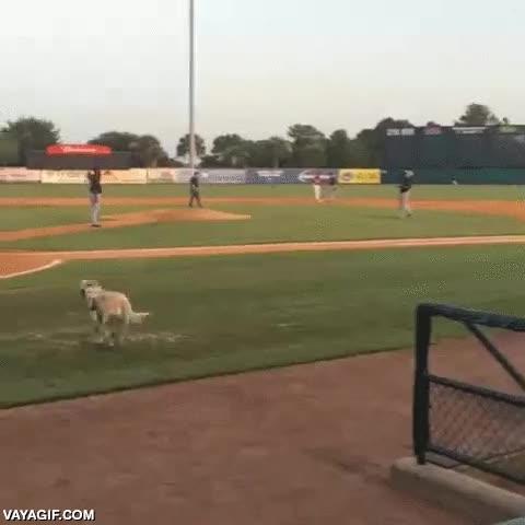 Enlace a Este perro es el verdadero MVP de este equipo de baseball