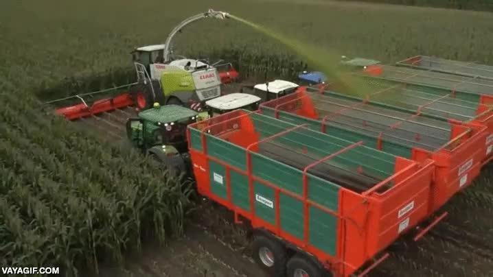 Enlace a Una cosechadora que recoge maíz de 20 filas a la vez
