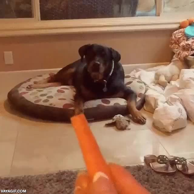 Enlace a Los reflejos de este perro a cámara lenta son increíbles