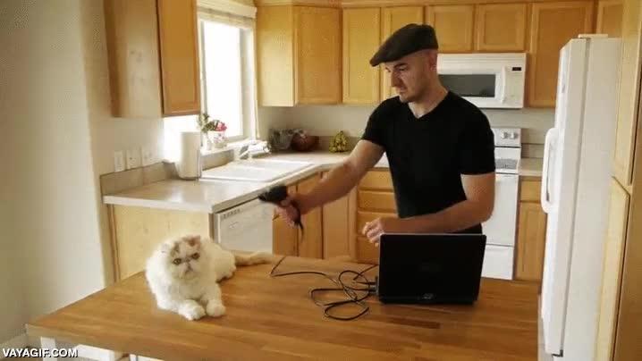 Enlace a La máquina clonadora de gatos