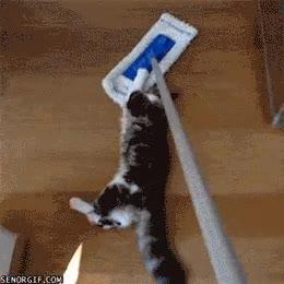Enlace a El ''atrapa-gatos'', dejará tu casa libre de gatos en un santiamén