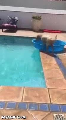 Enlace a Este perro ha desarrollado un sistema para recuperar la pelota de la piscina sin mojarse