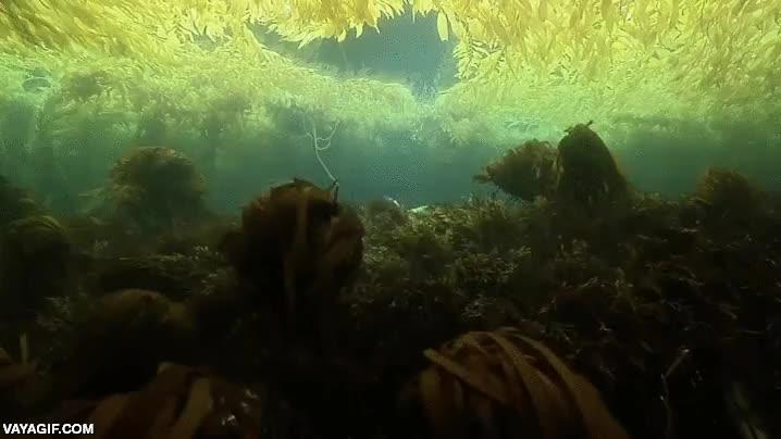 Enlace a La majestuosidad de un bosque de algas