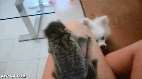 Enlace a ¡No puedes atraparme!