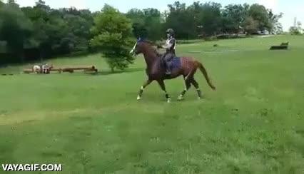Enlace a No todos los caballos saltan a lo loco el primer obstáculo que encuentran