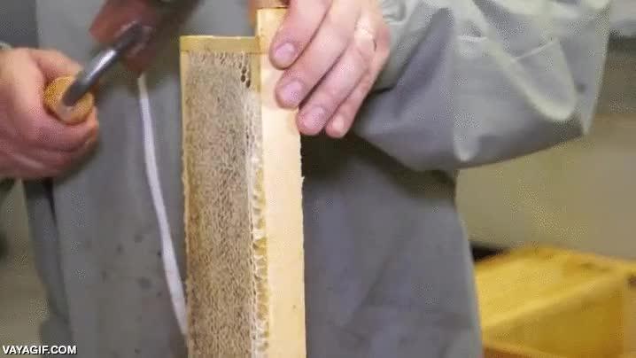 Enlace a Así se pelan de cera las capas de los panales en apicultura