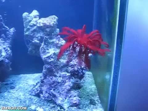 Enlace a ¿Una estrella de mar con plumas y nadando? Las criaturas marinas son una caja de sorpresas