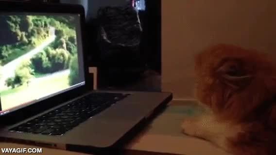 Enlace a Los gatos también son sensibles a los screamers del ordenador