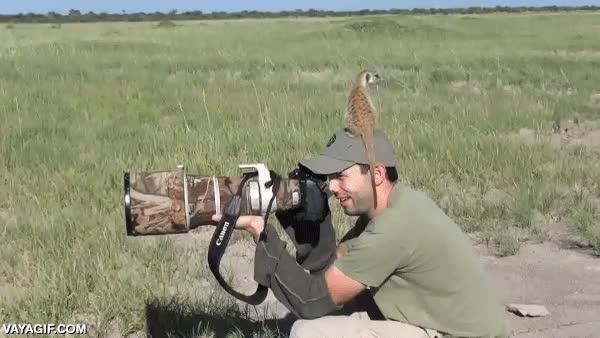 Enlace a Fotografiar suricatas no siempre es fácil